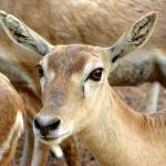 a little lovely deer is closely listening